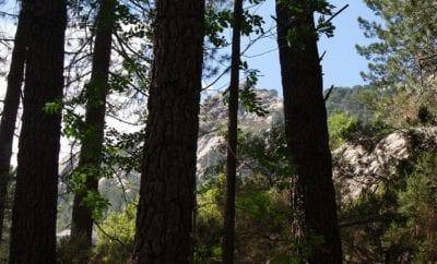 Top 5 des forêts en Haute-Corse
