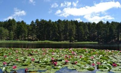 Top 5 des lacs de Corse du Sud