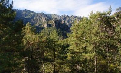 Top 5 des forêts en Corse du Sud