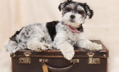 Emmener son animal en Corse pour les vacances